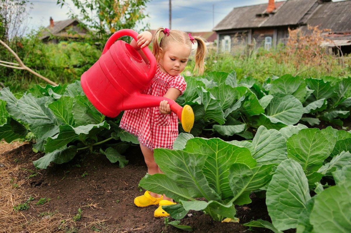 Для мужчины, смешные картинки про огород с детьми