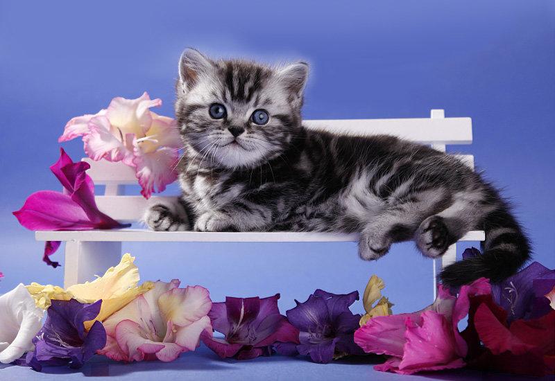 Открытки хорошего настроения приятного времяпровождения, котята