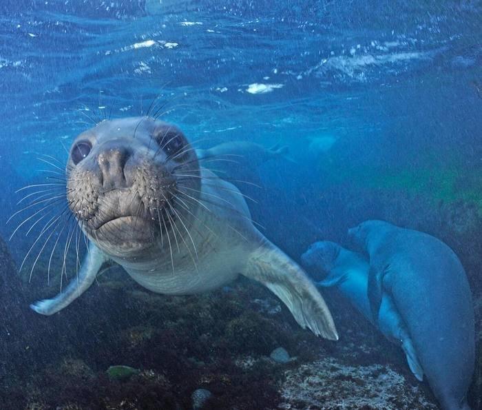 творческая жизнь тюлень плавает картинка появилась ворвалась