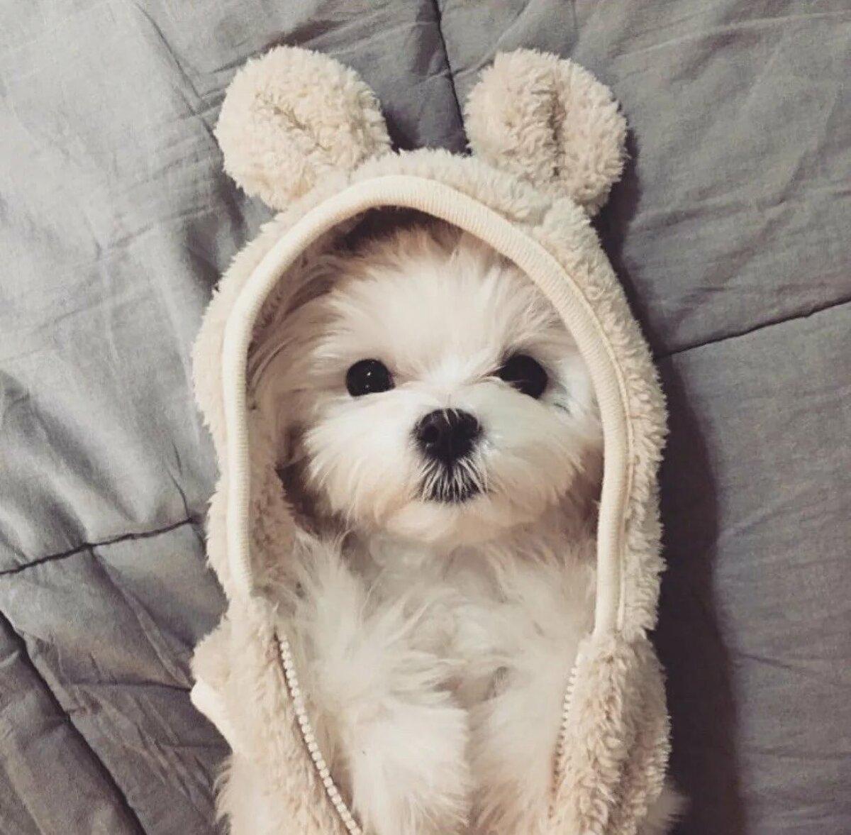 Картинки собаки милые маленькие
