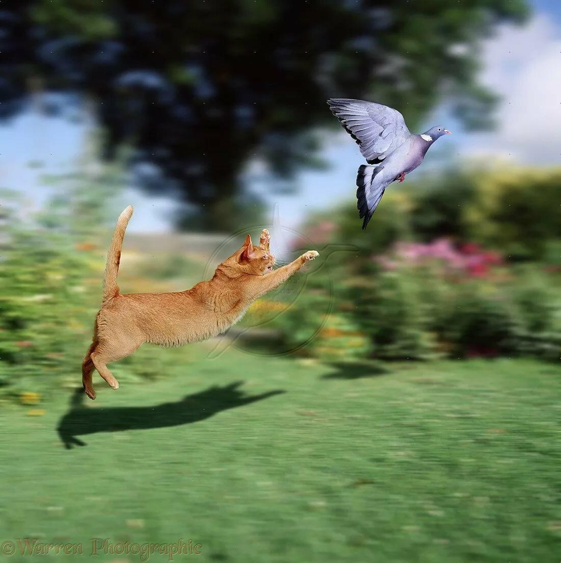 летать охота картинки отличие фокстерьера, джек-рассел-терьер