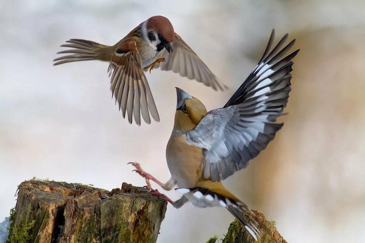 Птички в полете фото