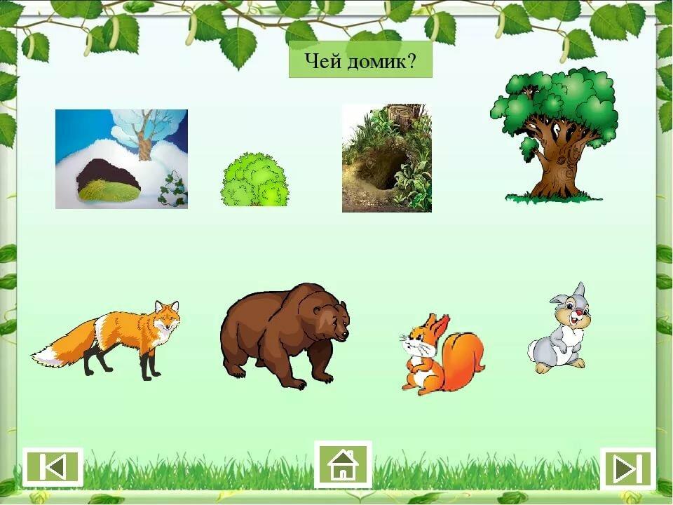 Дикие животные картинки для детей кто где живет