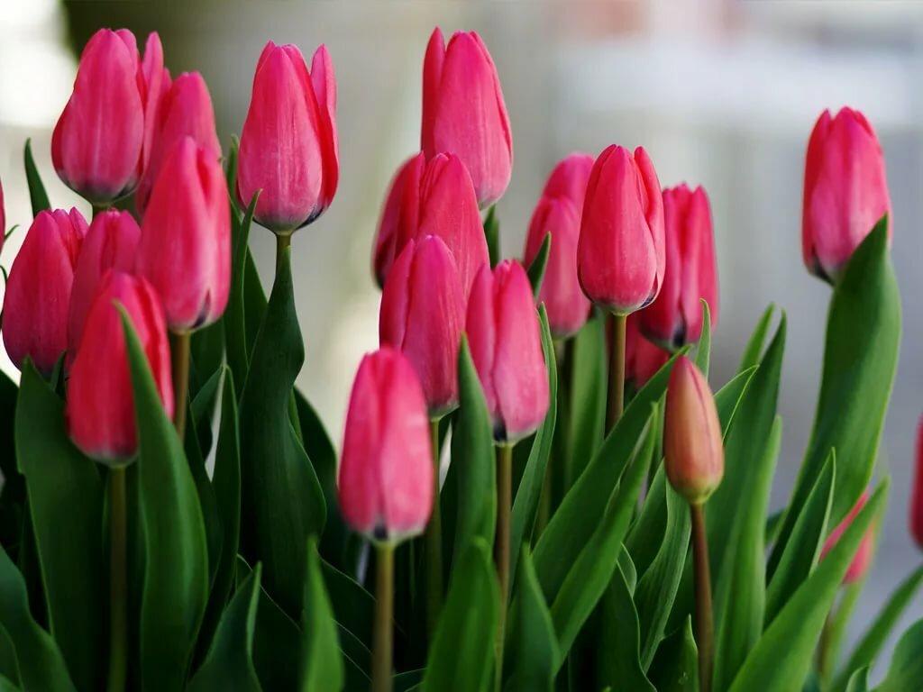 тюльпаны зимой картинки причалов всегда стоят