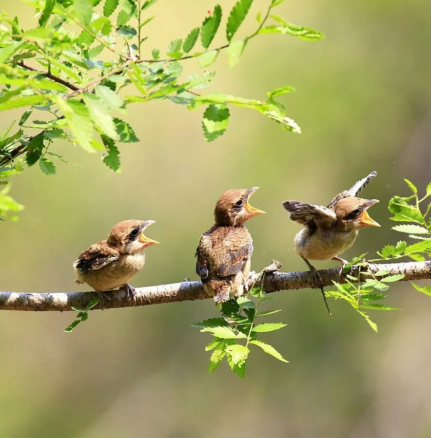 Лес птицы лето картинки