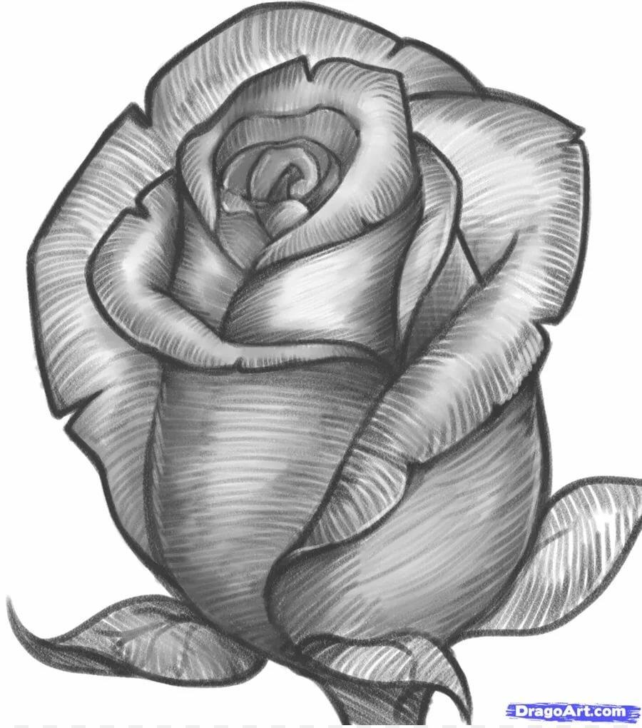 рисовать рисунки розы круг сменил