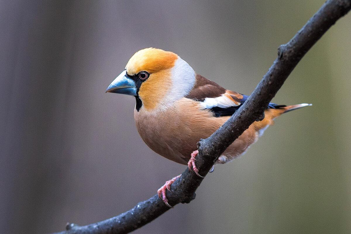 Птицы картинки и фото с названиями