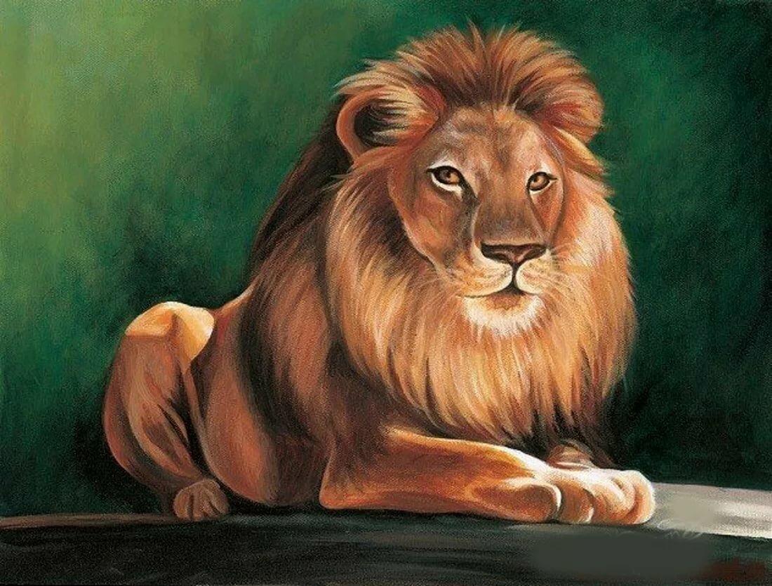 рисунки животных лев она