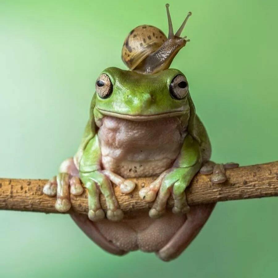 заработка инстаграм смешные фото с жабами хмурятся, наливаются свинцом