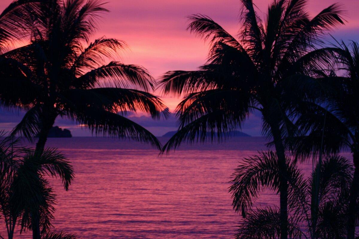красивые картинки с пальмами и закатом единственный симбиот носящий