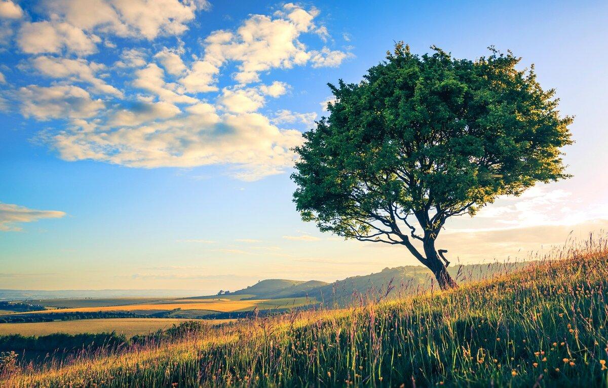 Деревья и небо картинки