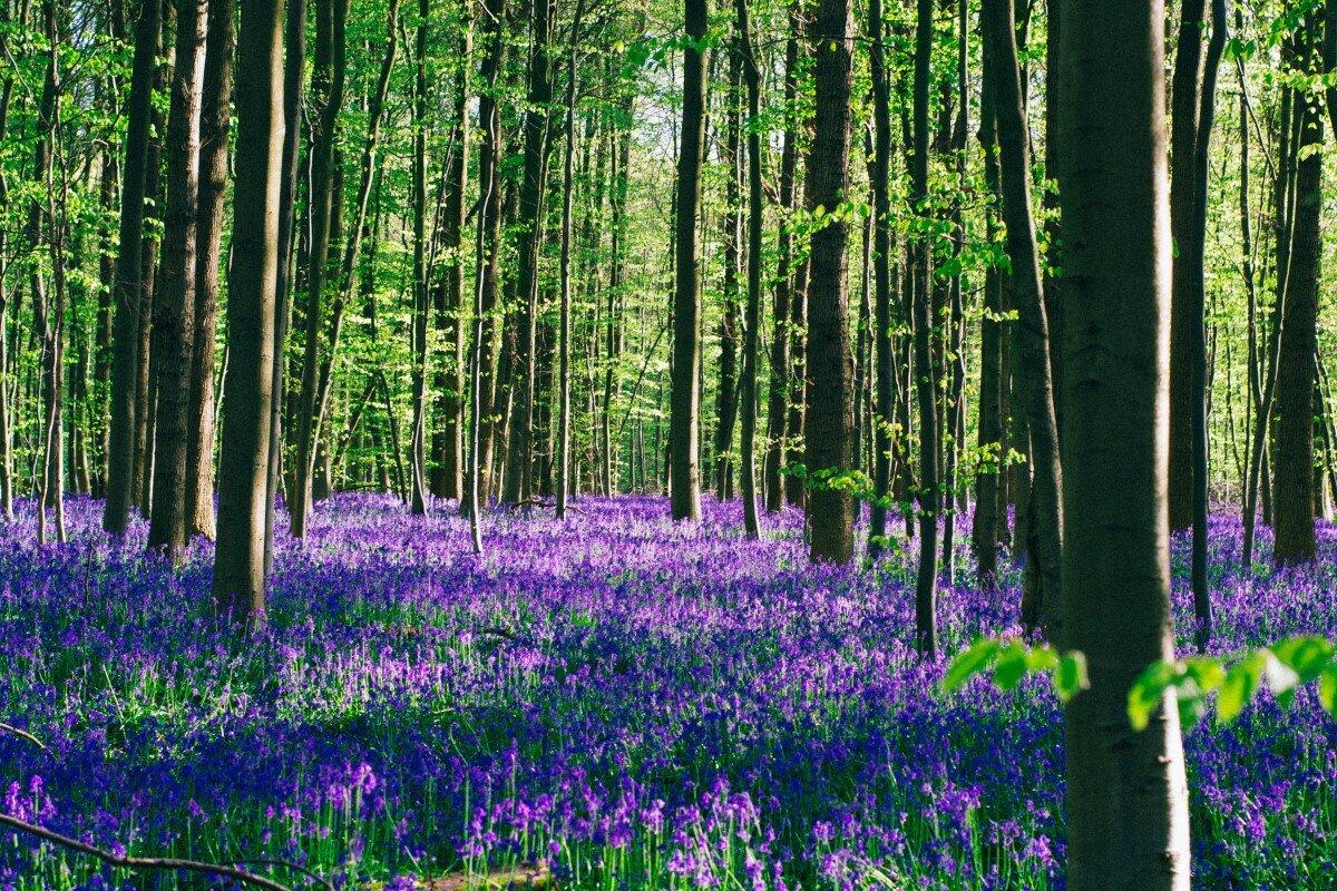 Растения леса с картинкой