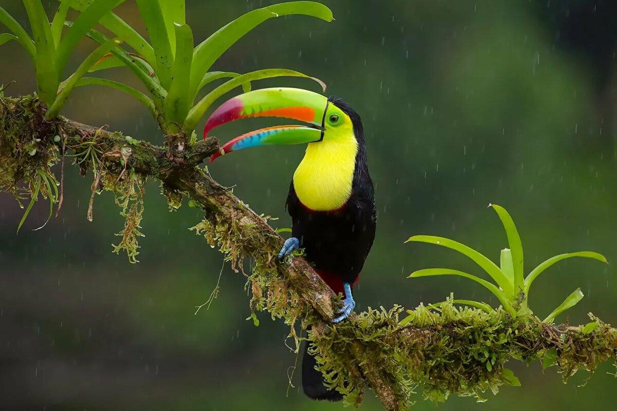 тропические животные фото день