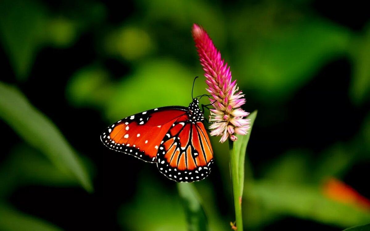Картинки на телефон бабочек