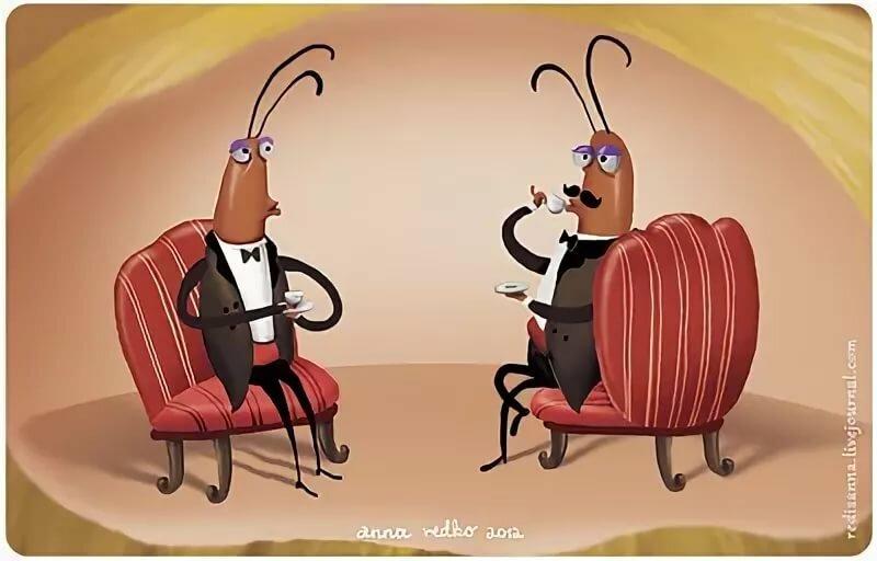Тараканы картинка юмор типы характер