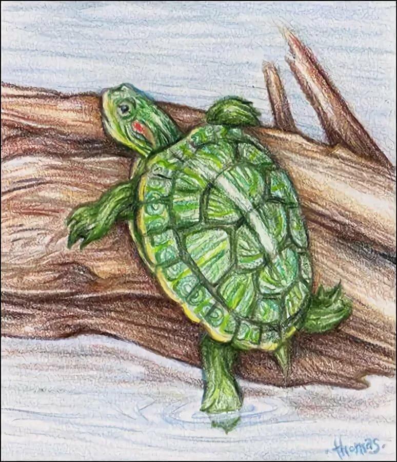Картинки нарисованных черепах