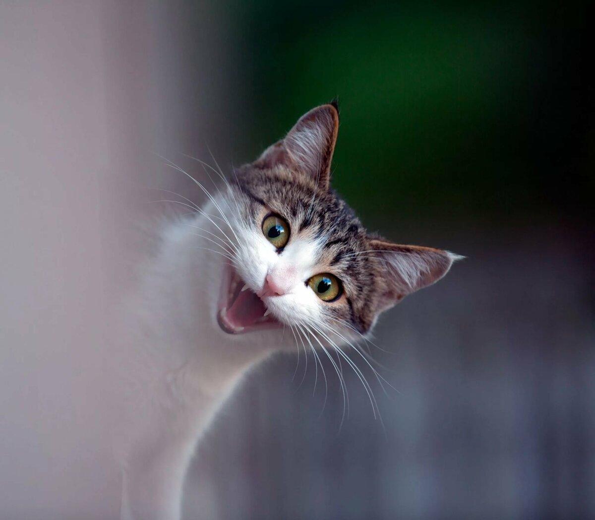 Картинки с счастливыми кошками