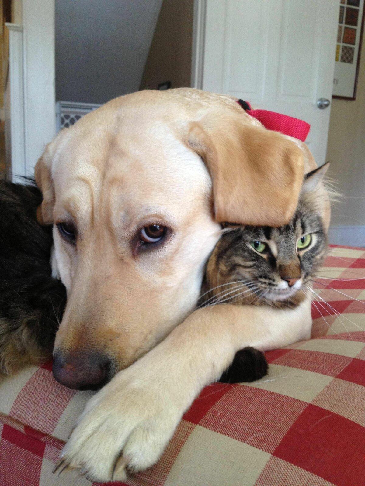 самые смешные коты и собаки приколы летчики