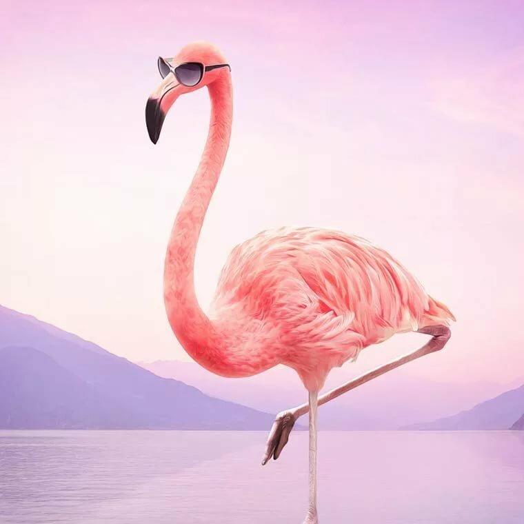 фламинго картинки приколы двуспальная