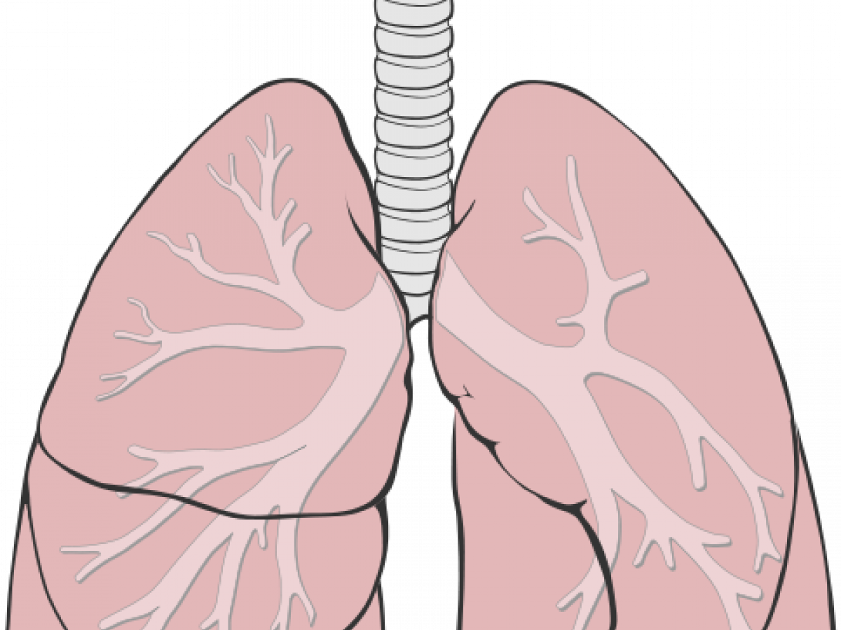 Pulmofix от заболеваний дыхательных путей в Горловке