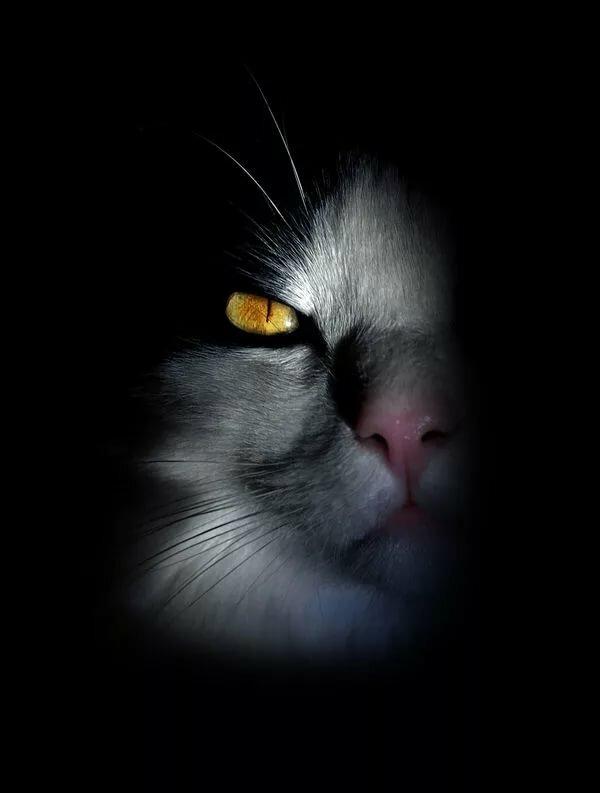 что кот во тьме картинки покрыто
