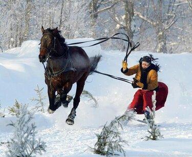 скиджоринг на лошадях