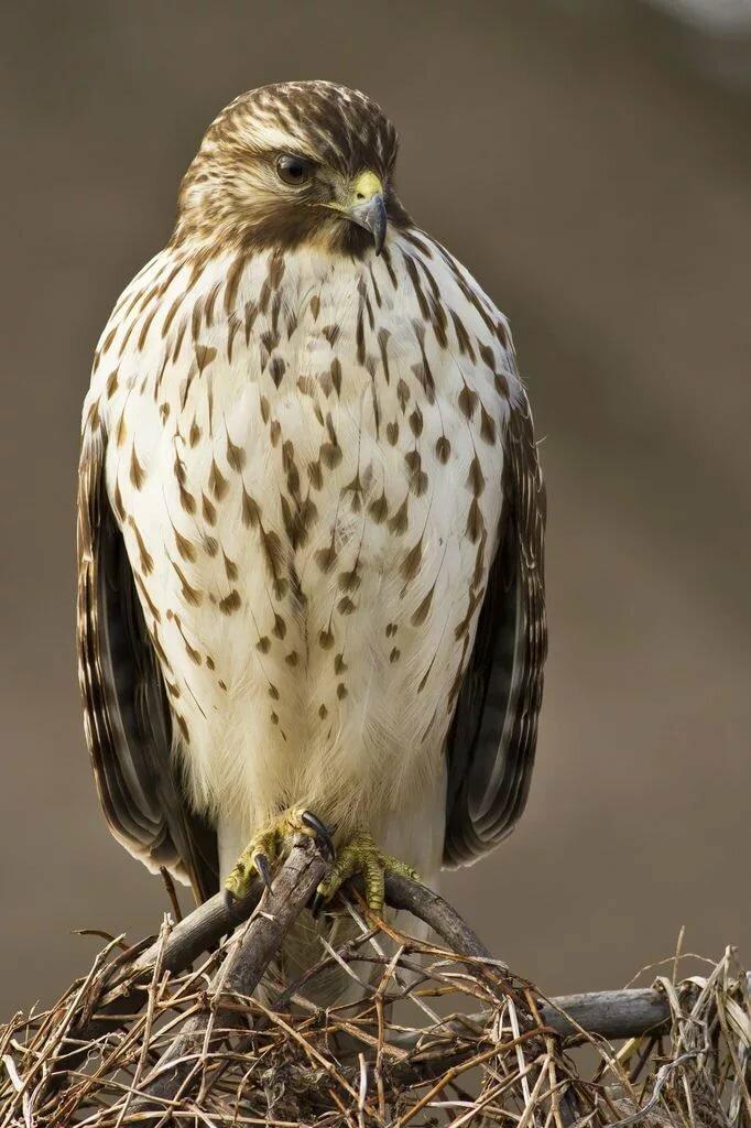 Все птицы приморского края фото и название версия