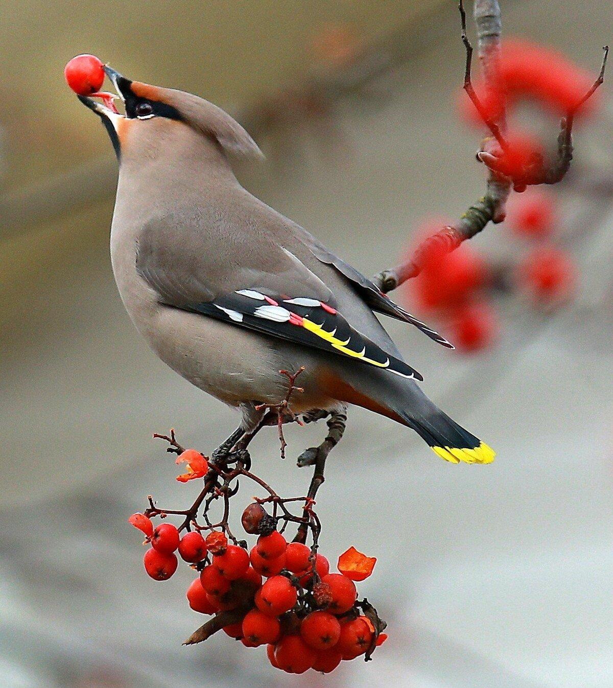 смотреть картинки птиц украине есть