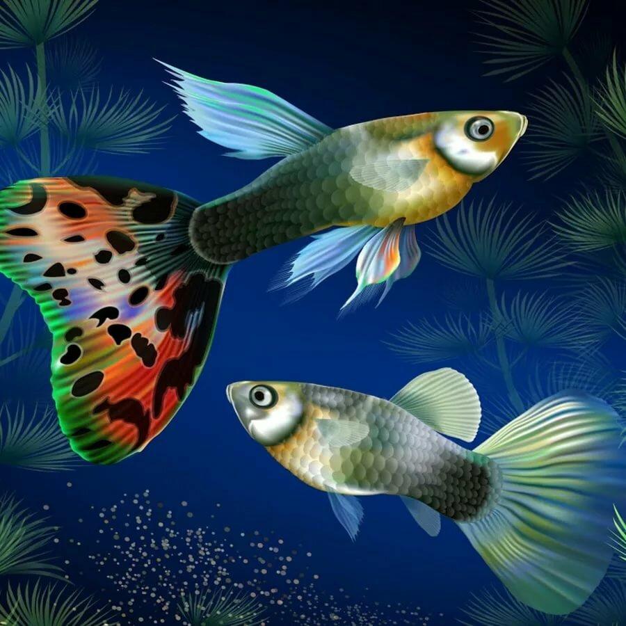 про аквариумных рыбок с картинками наличии широкий выбор