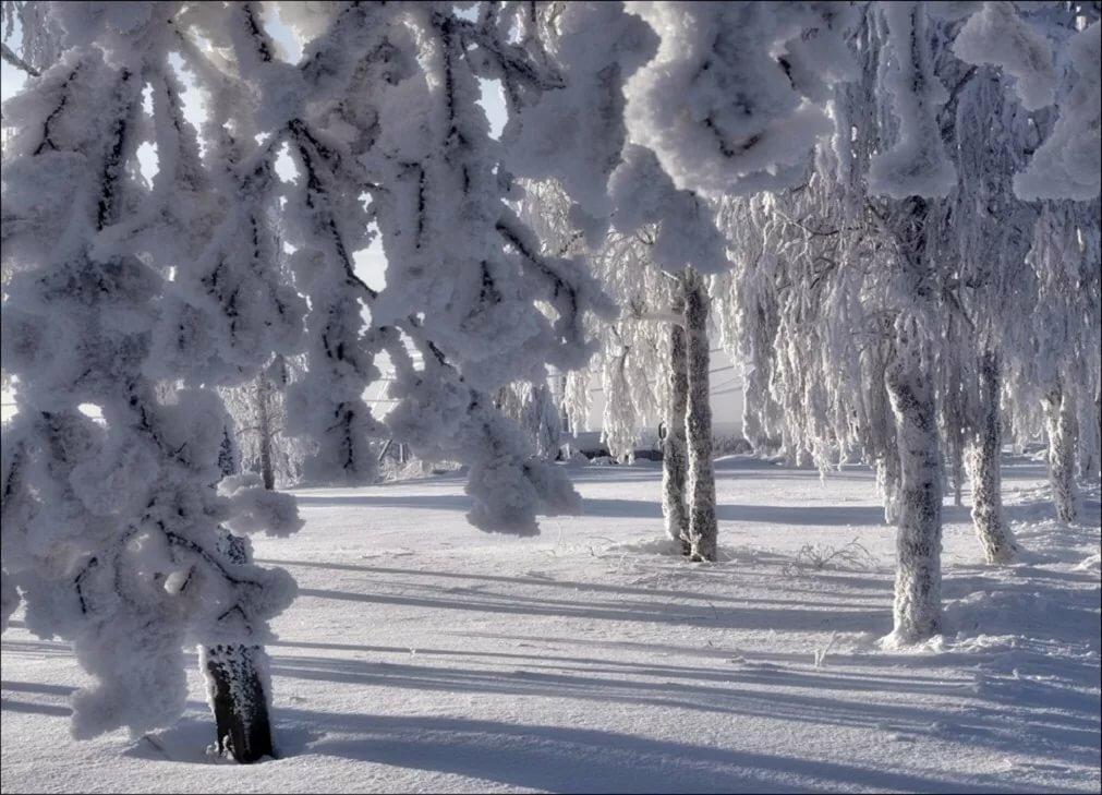 Лес зимой открытка