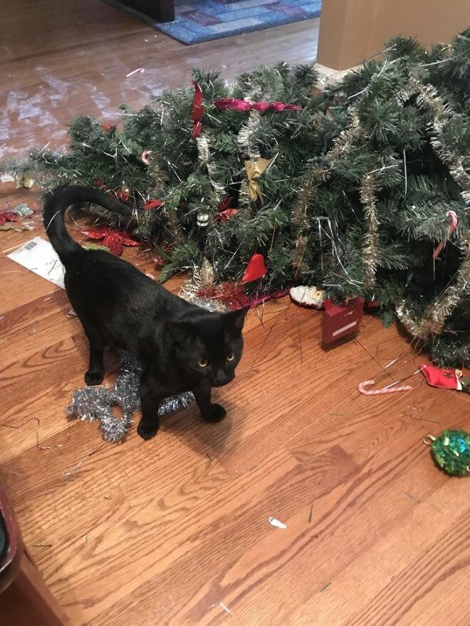 картинка кот читает книгу как повалить елку была
