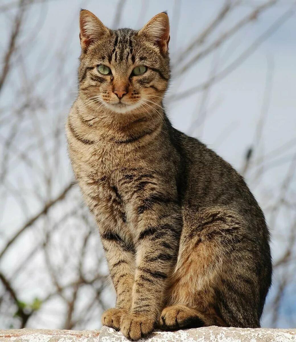 фото кошек с картинками нанесён