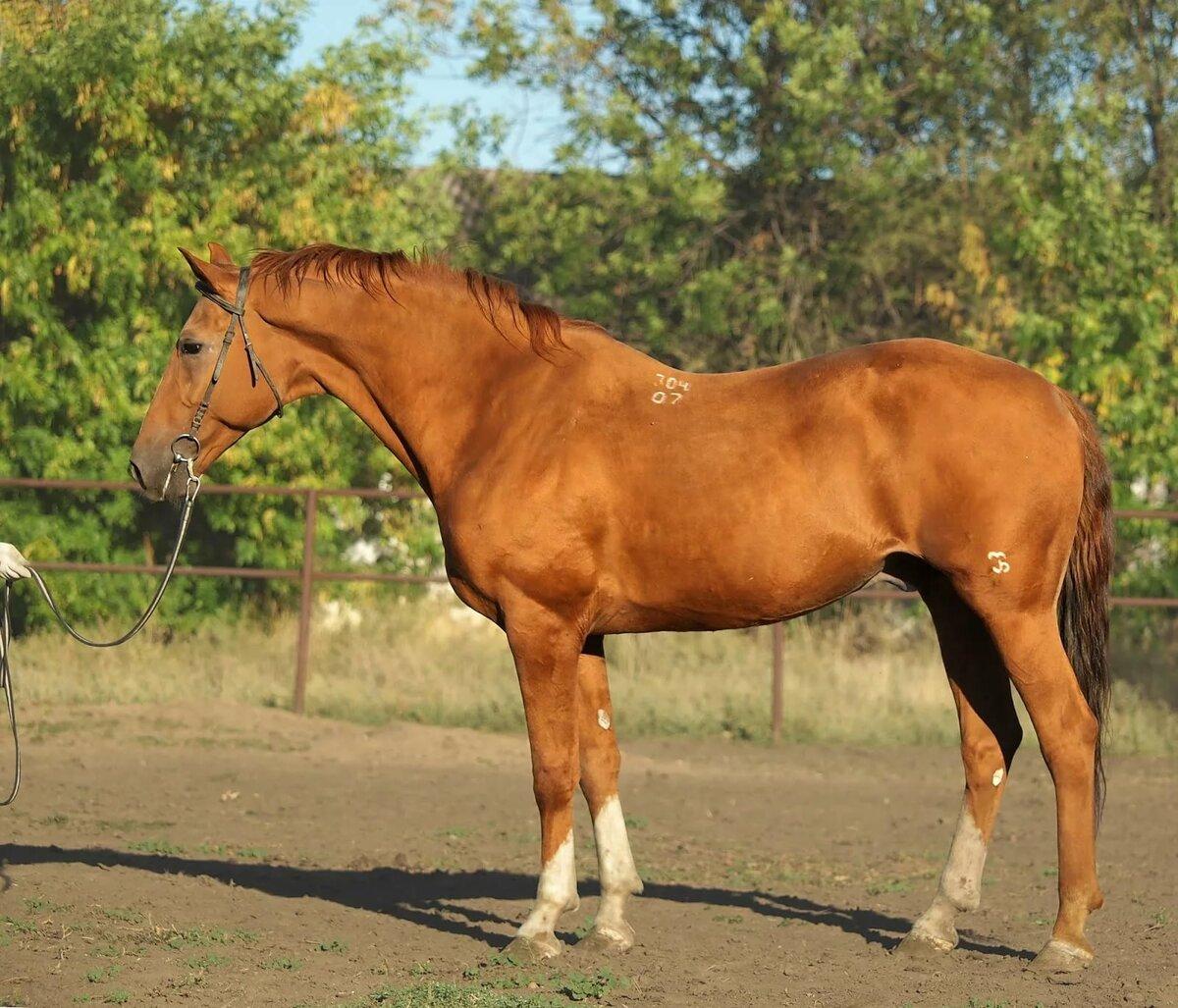 таллинна лошади картинки донская организовал