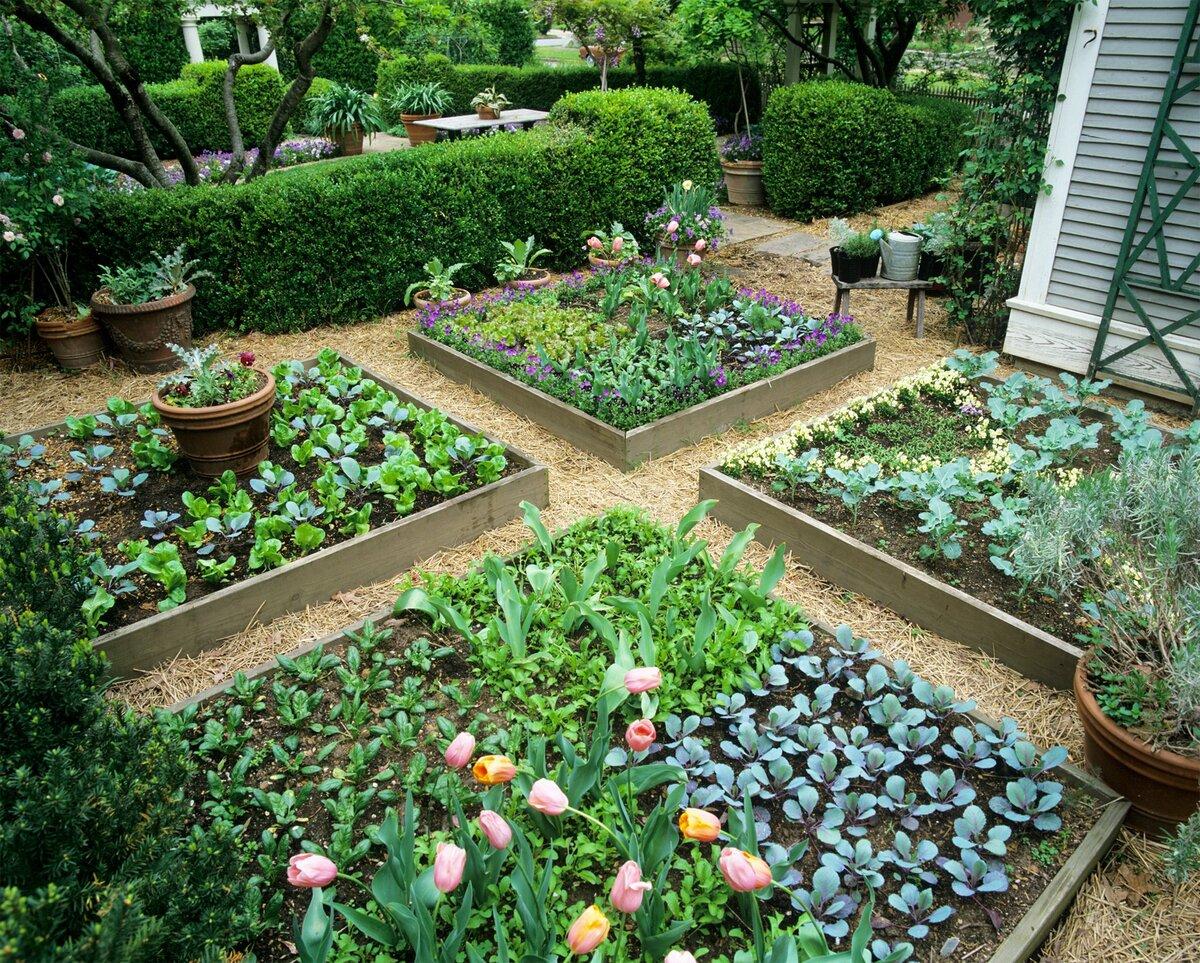 Как красиво оформить грядки в огороде фото учился