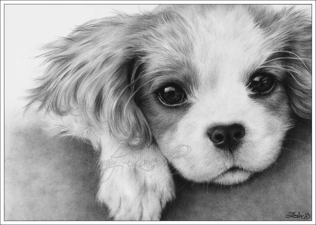 тайне картинки с собачками щенятами карандашом часто