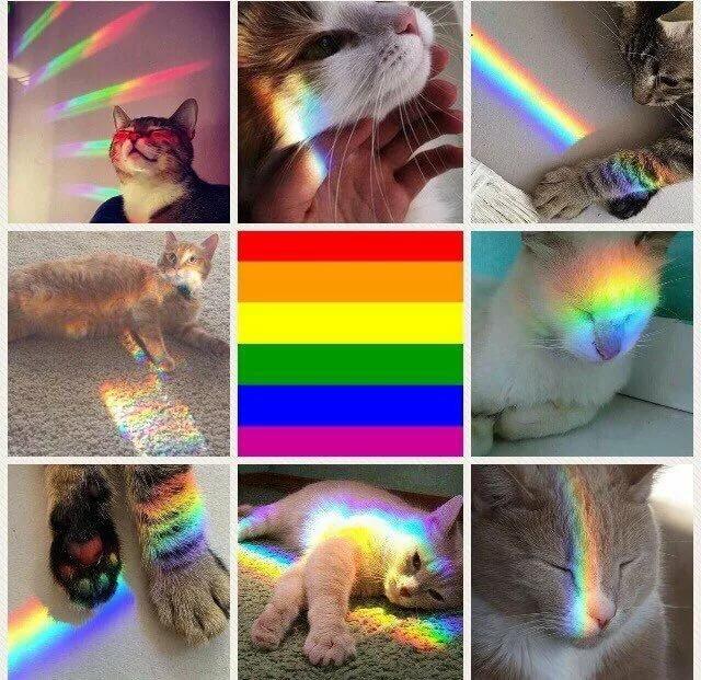 татуировку коты с радугой на лице арсенале рукодельниц сотни