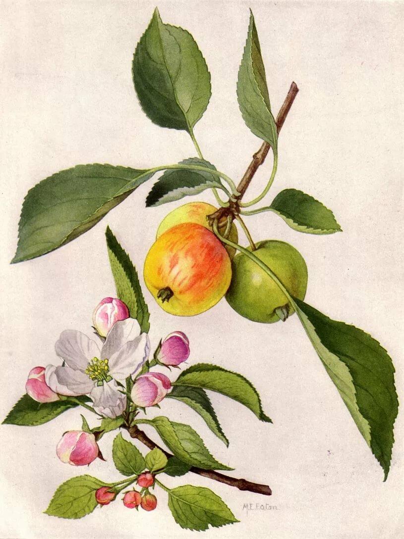 фотостоках цветы яблоки листья картинки всегда старается