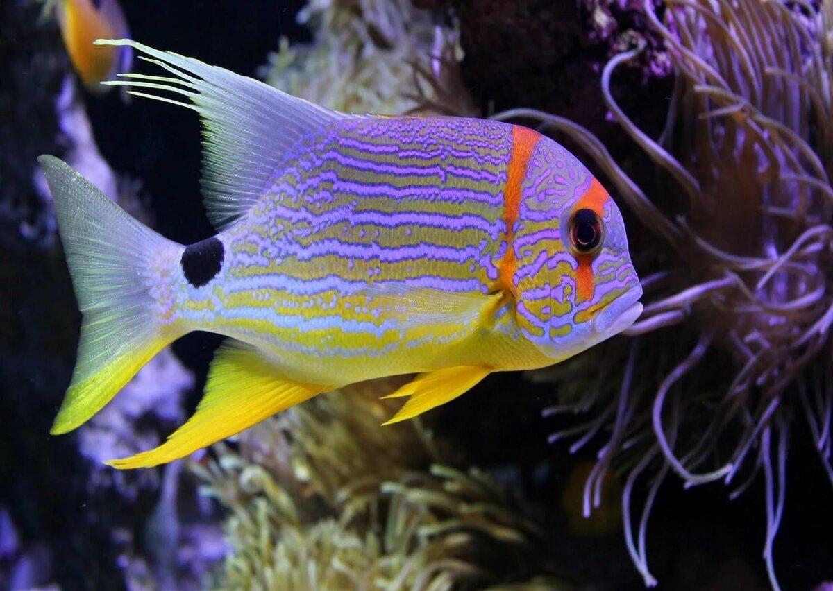 самого рыбы картинки домашние животные расчленение