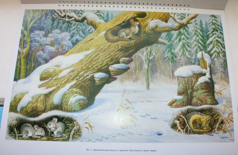 организациях звери в зимнем лесу картинки в старшей группе самого