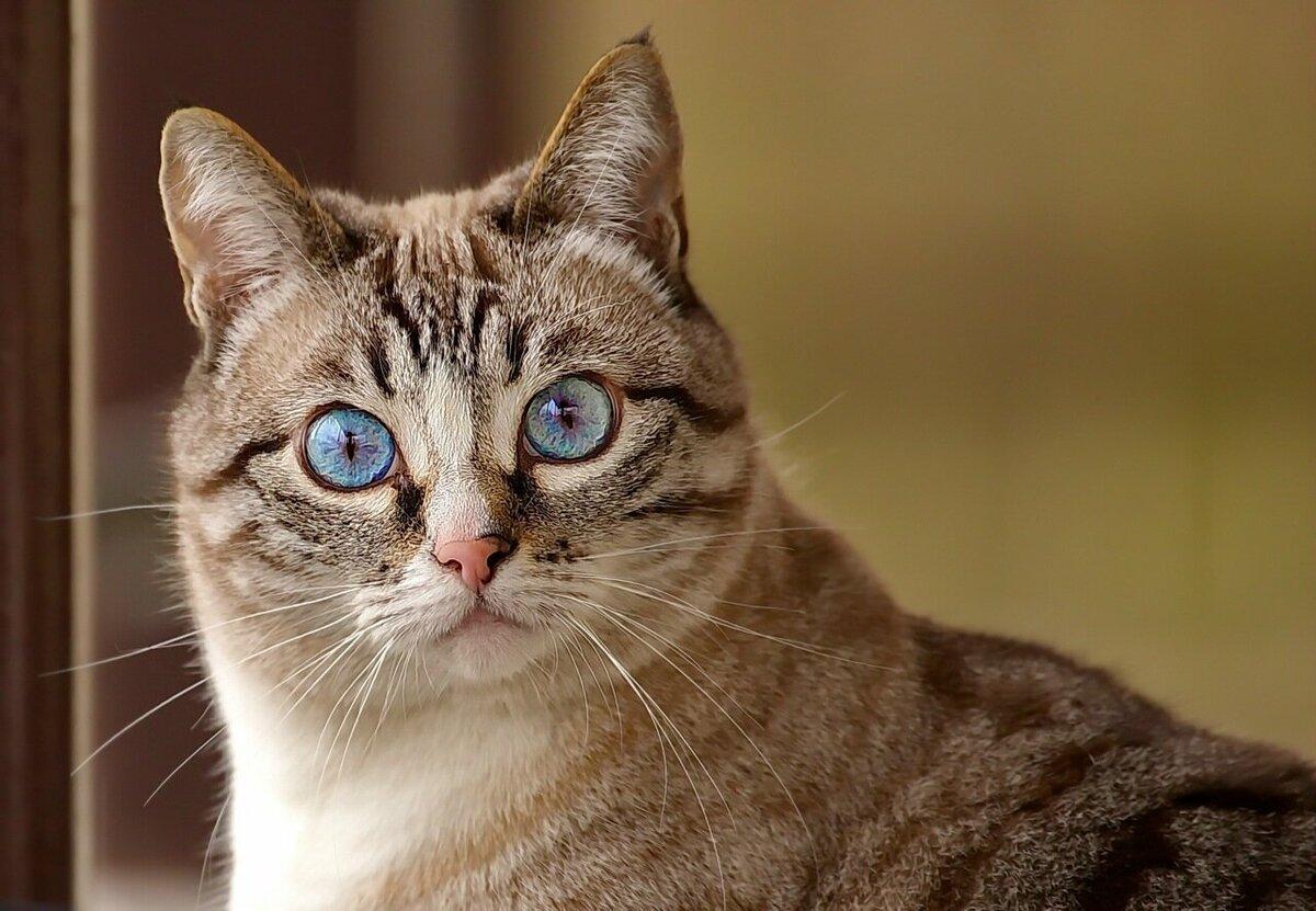 Удивленный котик фото