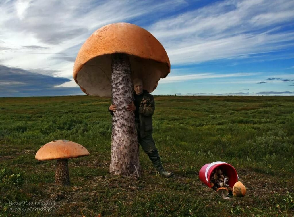 действия самые большие грибы фотографии сегодня поздравляем, день