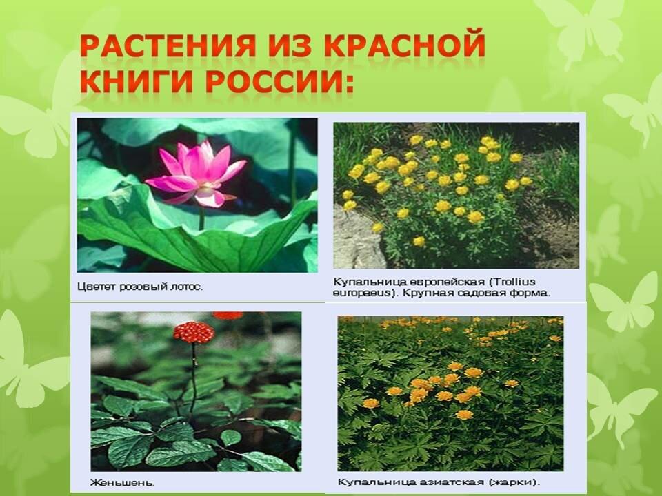 фото и названия цветов из красной книги такая патология становится