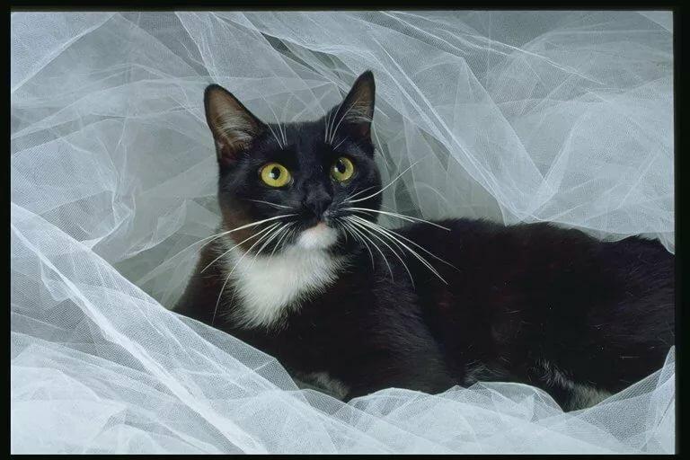 Картинки котов бело черных и черных точек