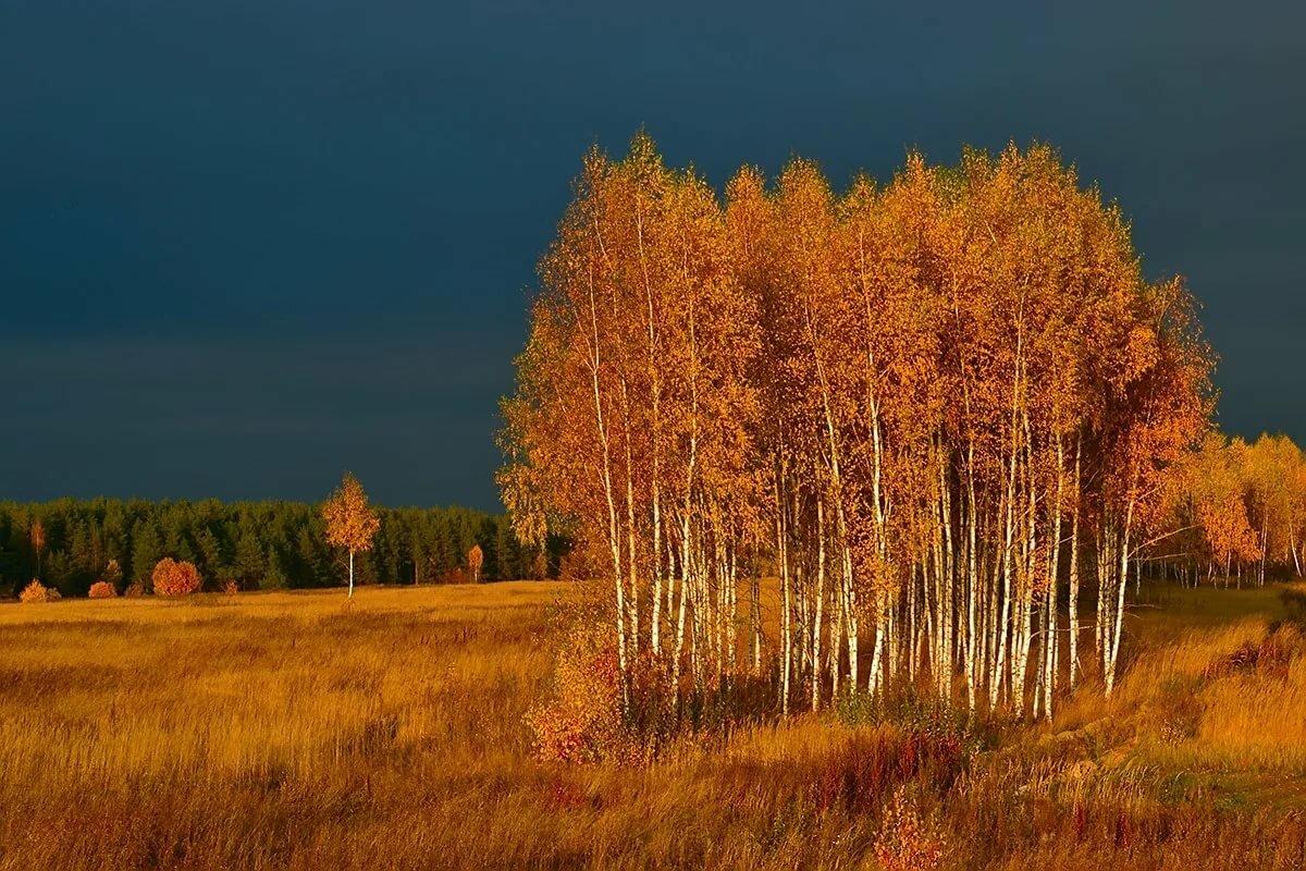 фото осень поле лес заправки