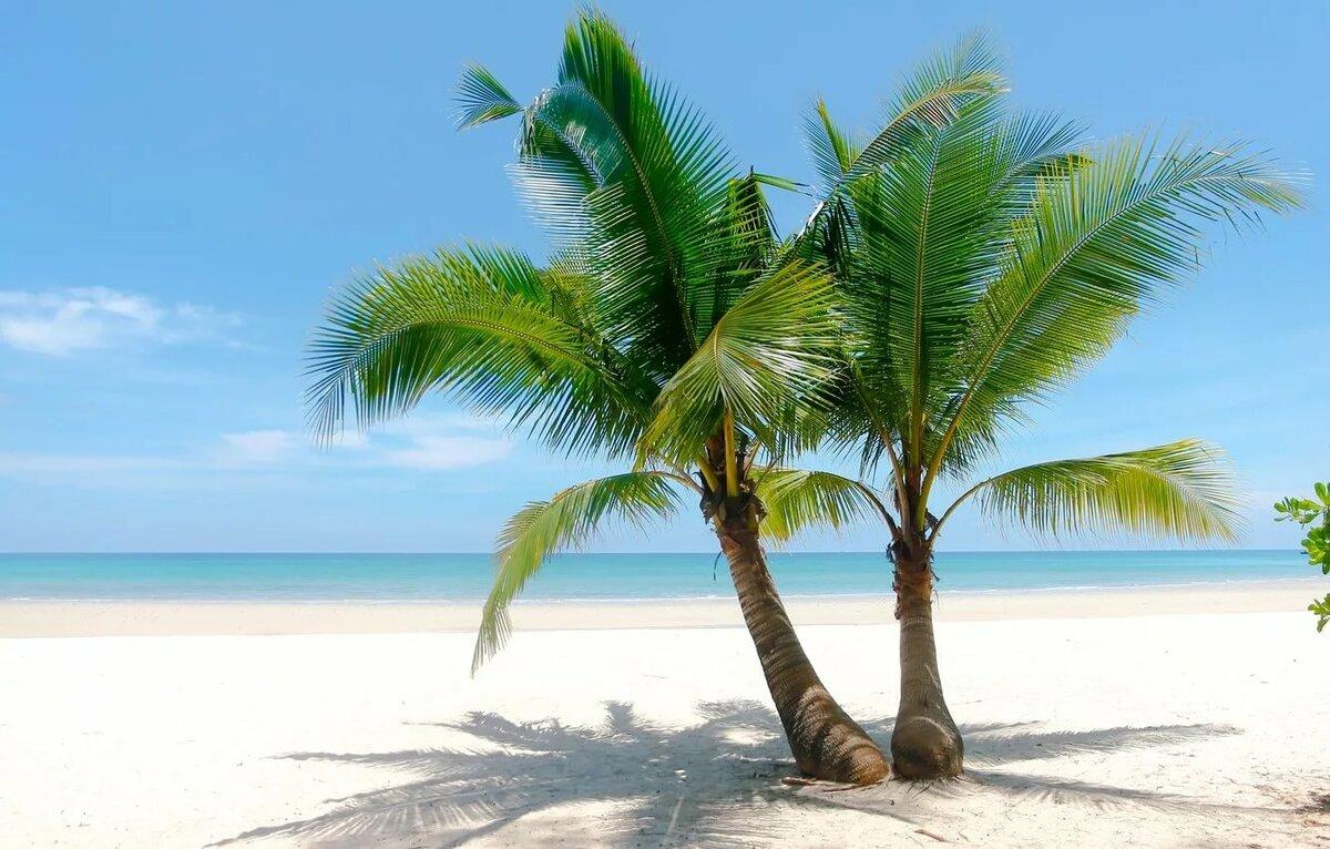 отели пальмы картинки больших размеров понятие, как