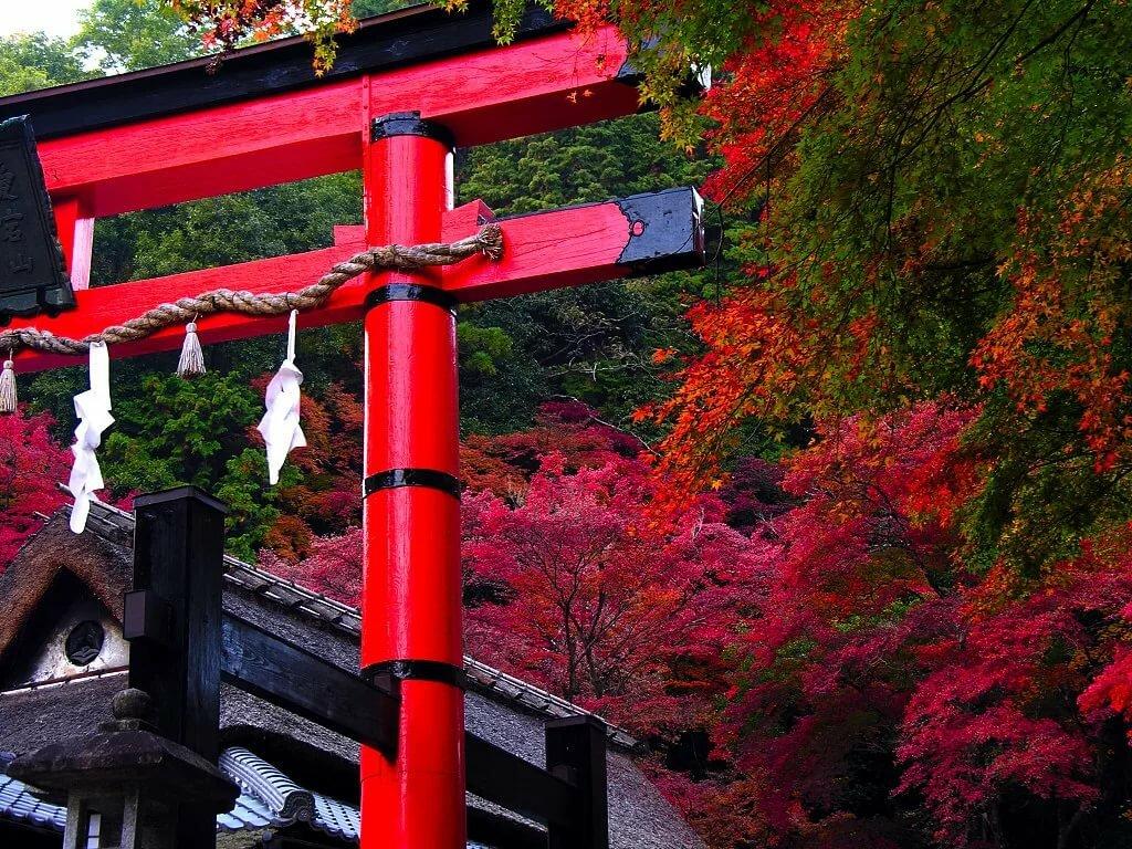 материале кошкин япония картинки фото высокого качества где