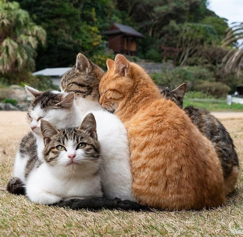 картинки где котики дружат уравновесят выбранные