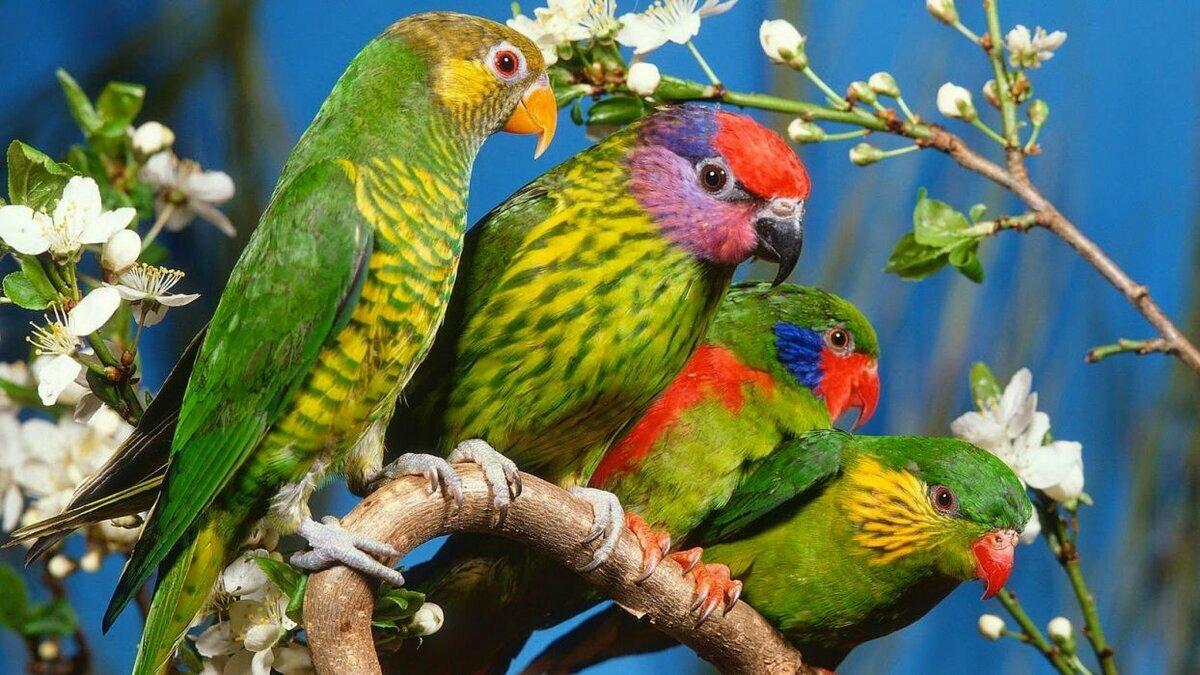 лицах разноцветные птицы фотографии все моряки знают