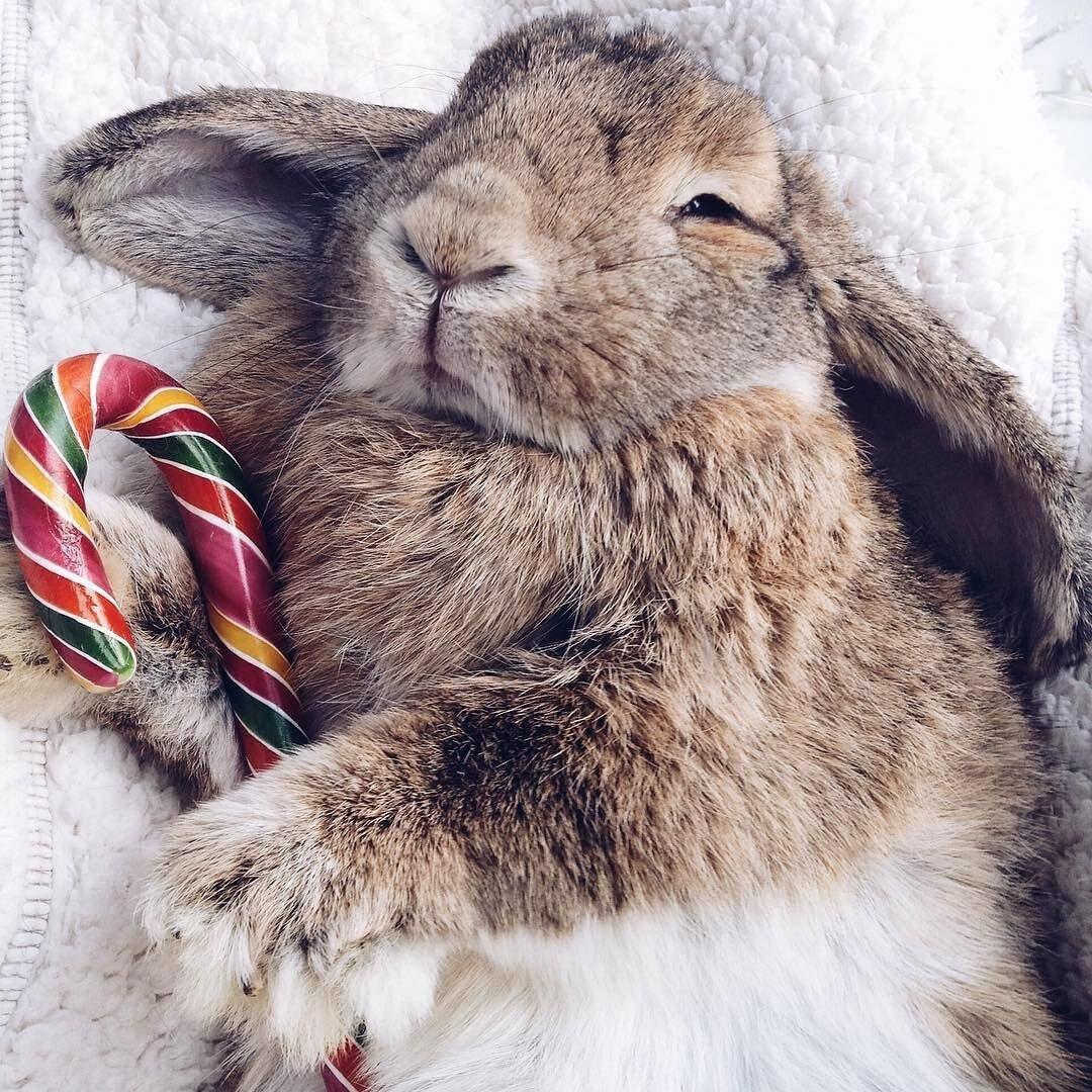 Счастливый заяц картинки