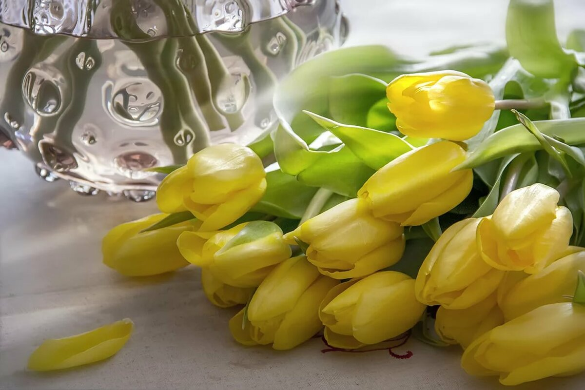 всего, картинки тюльпаны в феврале станции располагают современной